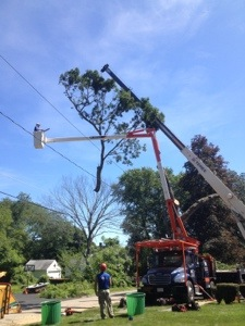 tree removal crane, Medway