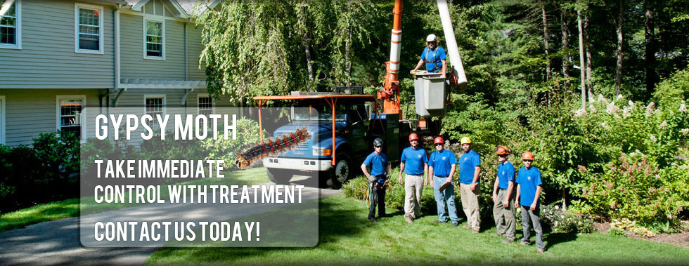 Bark Busters Tree Service -Weston, WestWood, Norton MA
